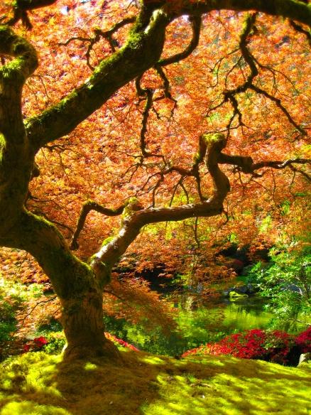 Portland_Japanese_Garden_maple